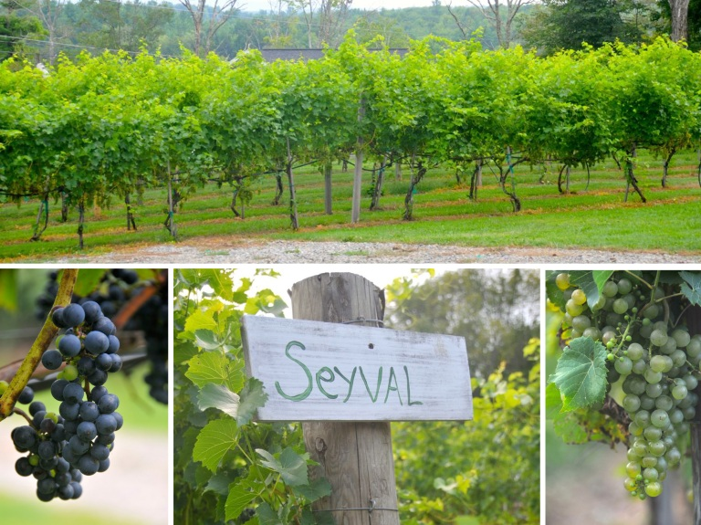 A little slice of heaven in the New Hampshire country side.  Marshal grows all of his own grapes for his wines.