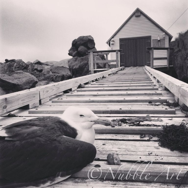 This is the ramp to the boathouse.  The keeper crosses between the mainland and Nubble via row boat.