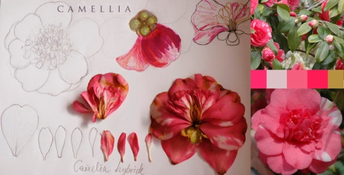 In order to get better at anything we do requires study.  Mila does this with each of the flowers she creates.